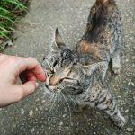 Cani e gatti allergici agli umani
