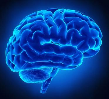 5 miti da sfatare sul cervello